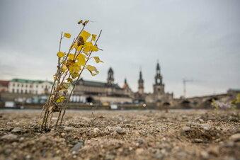 Grüne wollen Klimafonds für Sachsen