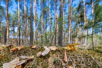 Brandgefahr in Sachsens Wäldern steigt