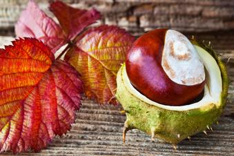 Vielseitige Herbstfrüchte