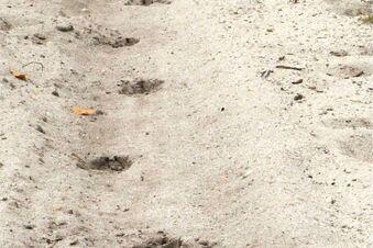 Tiere hinterlassen viele Spuren