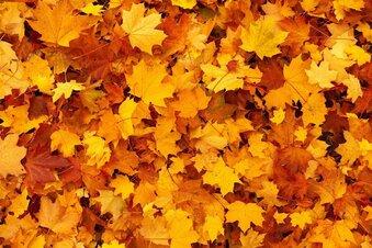 Wohin mit all dem Herbstlaub?