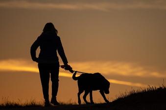 Hunde-Urin ließ Ampelmast umstürzen