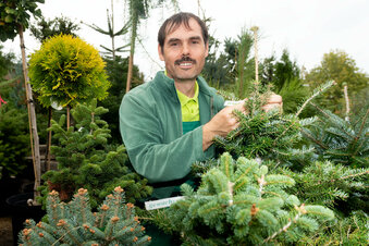 Bautzen: Werden Weihnachtsbäume teurer?