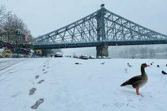 Viel Schnee in Dresden zum Wochenende