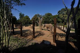 Mehr Platz fürs Liebesspiel der Dresdner Zoo-Elefanten