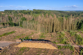 Sind Sachsens Wälder noch zu retten?
