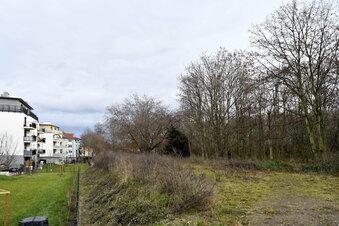 Dresdner Stadtrat entscheidet über Wald