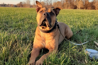 Wurde Hund Balu ein Opfer von Gift?