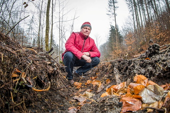 Illegale Fällung im Seifersdorfer Tal