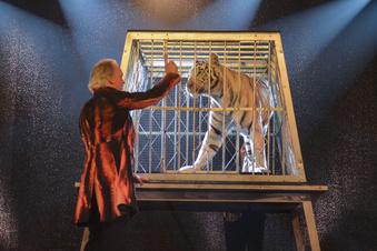 Sarrasani will den Tiger wieder an der Leine