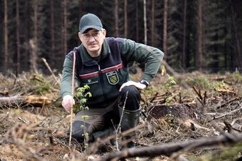 Neue Bäume für die Dresdner Heide