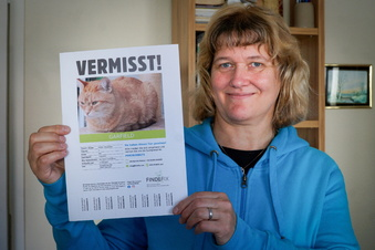 Vermisste Katzen in Bautzen: Kater Garfield ist zurück