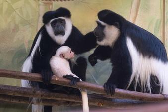 Dresdner Zoo erhöht die Preise
