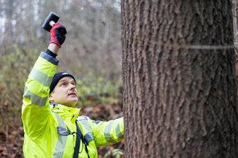 Wenn der Baumkontrolleur anklopft