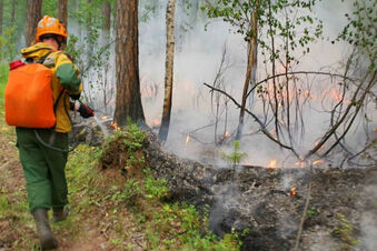 Die russische Taiga brennt