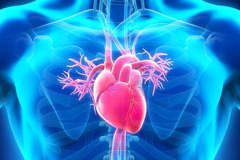 Begünstigen Blutdrucksenker die Coronaviren?