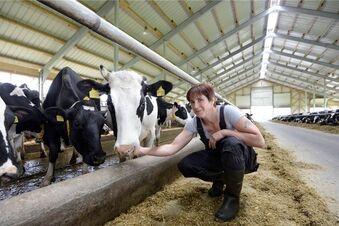 Weniger Kühe geben mehr Milch