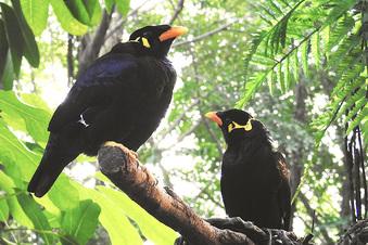 Traumpaar: Zoo freut sich über seltene Vögel