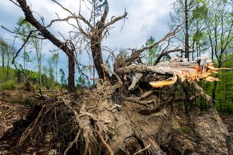 Spendenziel für Bautzener Stadtwald übertroffen