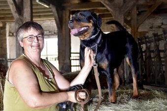 Tierärztin: 60 Euro für den Notfall