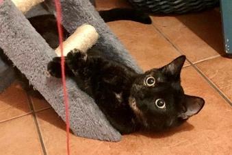 Katze in Großenhainer Innenstadt erschossen