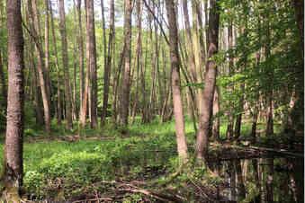 Route 10: Beim Waldwandern zur Ruhe kommen