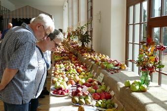 Äpfel über Äpfel in der Orangerie