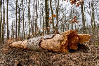 Der Wald stirbt