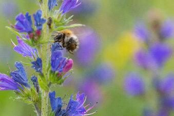 Beliebte Biene