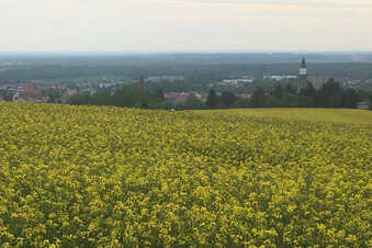 Route 14: Gelbe Felder, grüne Wälder