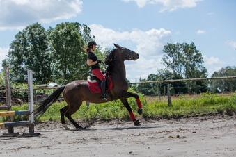 Pferde verstehen mehr als wir ahnen