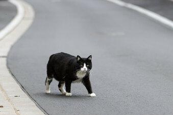 Katze in Dresden misshandelt