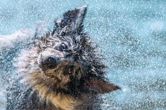Geibeltbad wird erstmals zum Hunde-Pool
