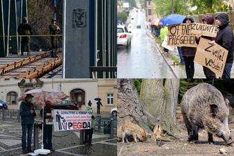 Klickstark: Jäger ärgert Schweinepest-Regel