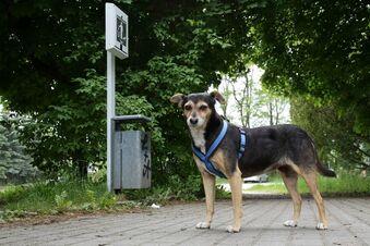 Hundetoiletten allein halten Niesky nicht sauber