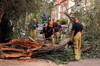 Baum stürzt auf Autos in Dresden
