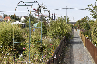 Verschwinden die Kleingärten aus Dresden?