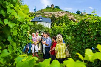 Hoflößnitz holt Medaillen für Bio-Weine