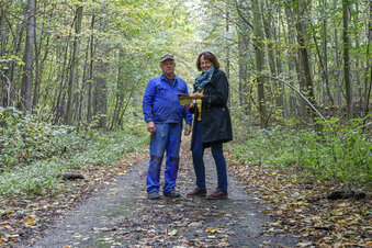 Bekommt Löbau einen Bestattungswald?