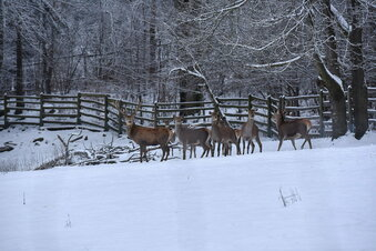 Dresdner Heide: Tiere leiden unter Besuchermassen