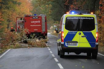 """""""Ignatz"""" fällt Bäume und kappt Stromversorgung"""