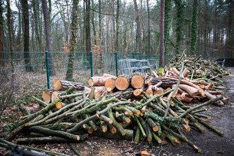Nabu kritisiert Baumfällungen in Blasewitz