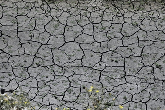 Umfrage: Klimakrise als größtes Problem