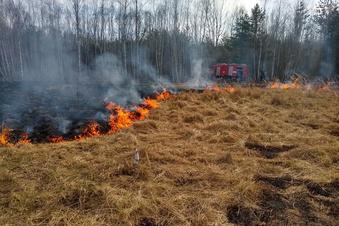 Brandrodung bei Zeißholz