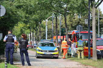 Hornissenangriff in Dresden: Verletzte im Großen Garten