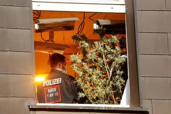 Experte: Mehr Drogenkriminalität bei Cannabis-Freigabe