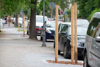 Robuste Bäume sollen Dürre trotzen