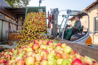 Keltereien haben ein Apfel-Problem