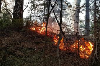 Im März schon zwei Waldbrände in Oybin