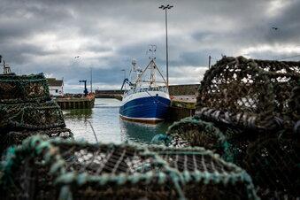 Brexit: Schadenersatz für Fischhändler